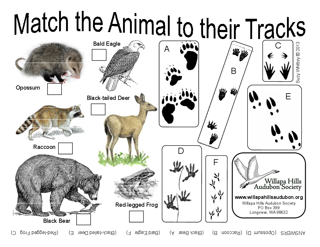 WHAS-Match Animal Tracks