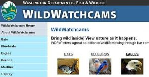 Website of WDFW WildWatchCAM